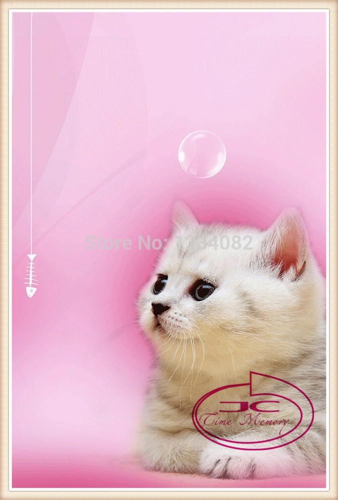 Diy diamond paintingresin of smallcute cat painting cross stitching animal with tools diamond painting for home decoration 30*45(China (Mainland))