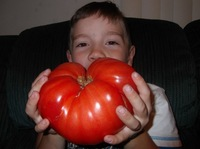 Fruits vegetables seeds MONSTER BEEFSTEAK TOMATO! 100 SEES! ! A SLICE BIG AS A SANDWICH! COMBINED S/H!