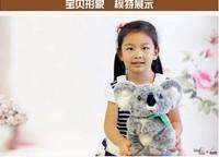 about 30 cm simulation koala bear AUSTRALIA koala doll , children's toy gift b3080