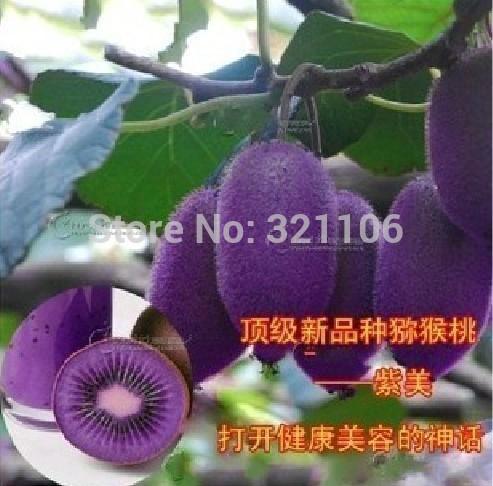 BOGO 50/% off SALE Leontonpodium 100 Seeds Edelweiss