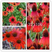 100 Firebird Coneflower Flower Seeds~beautiful gardens  Firebird Coneflower Flower Seed