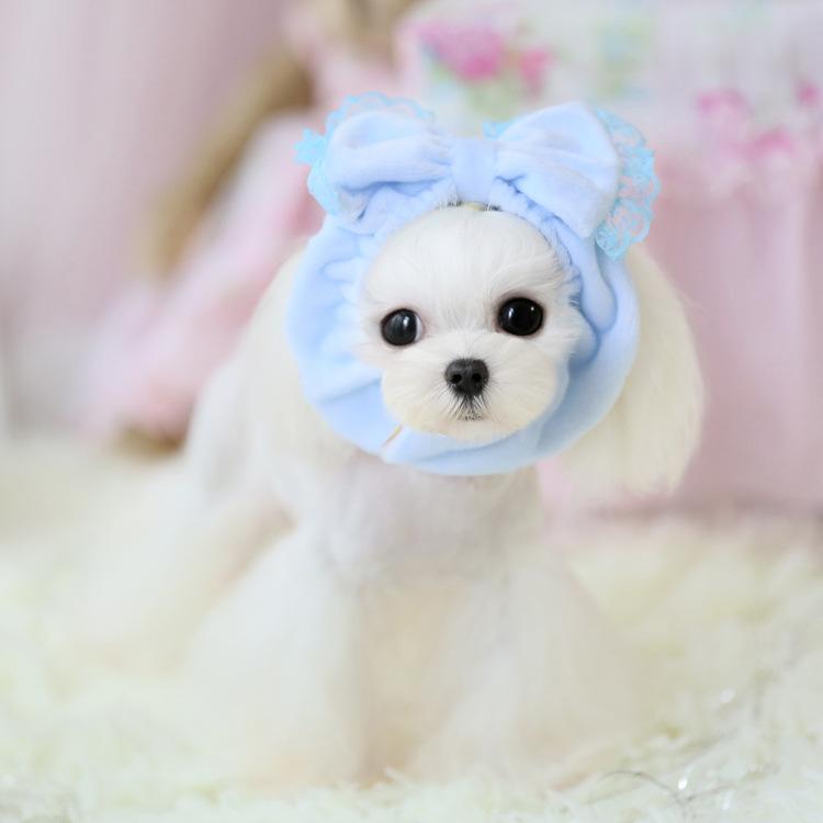 Comparer les prix sur Dog Wig - Online Shopping / Acheter Prix bas Dog