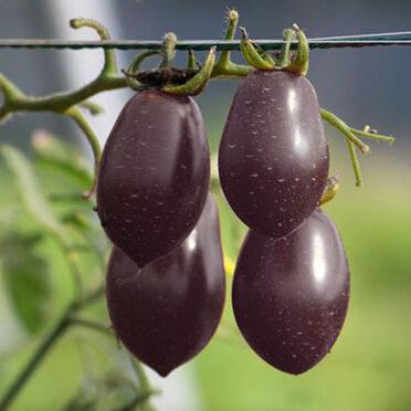 Карликовое дерево Fruit seeds 1 20 карликовое дерево fruit seeds 12
