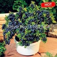 Free Shipping 50pcs Bonsai Blueberry fruit Tree Seeds