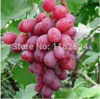 Free Shipping 100pcs Honey Red Grape fruit Tree Seeds