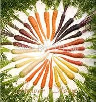 Big promotion:400 RAINBOW CARROT MIX F1 hybrid Seeds( Daucus carota ),Non Gmo Vegetable seeds ,Free shipping