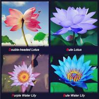 Flower seeds Bonsai  Four Color Blue Purple Red Dark Blue, 4 Pack Each Pack 10 Seeds Total 40 Lotus Seeds Home & Garden