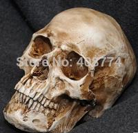 2014 Halloween horror resin skull decoration 1:1 human simulation skull model medical,free shipping