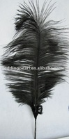 """wholesale 600pcs/lot 14-16"""" Black Ostrich Feather Plume FREE SHIPPING"""