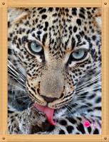 New Patchwork Diy Diamond Square Diamond painting tiger  Diamond Rrhinestone Pasted Painting Diamond Free Shipping