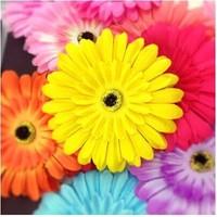 509 gerbera large flower headband hair rope corsage flower hair clip two-site hair accessory