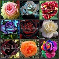 Free Shipping 100pcs 24 Colors Fresh Rare ROSE Seeds - Bonsai Flower Plant Seeds