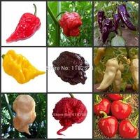2014 Regular New Hot Sale Sementes Seeds Vegetables World's Hottest Pepper - Trinidad Moruga Scorpion Vegetable Seeds (100 )