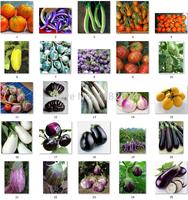 Free Shipping 500pcs 25Kinds Organic Eggplant Seeds vegetable seeds