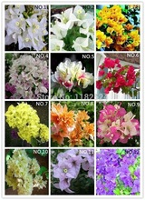 AliExpress |Free Shipping 100pcs 20 Colors Bougainvillea spectabilis Willd Seeds bonsai flower plant seeds