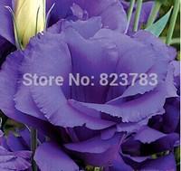 2014 new varieties of colorful Eustoma grandiflorum seed Turkey Balloonflower seeds room flowers