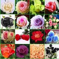 2014 rose seed meal package mail Flower seeds rose seeds 240 grains of classification packaging bag mail 24 varieties