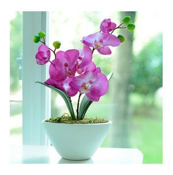 Emejing Indoor Potted Flowers Gallery - Interior Design Ideas ...