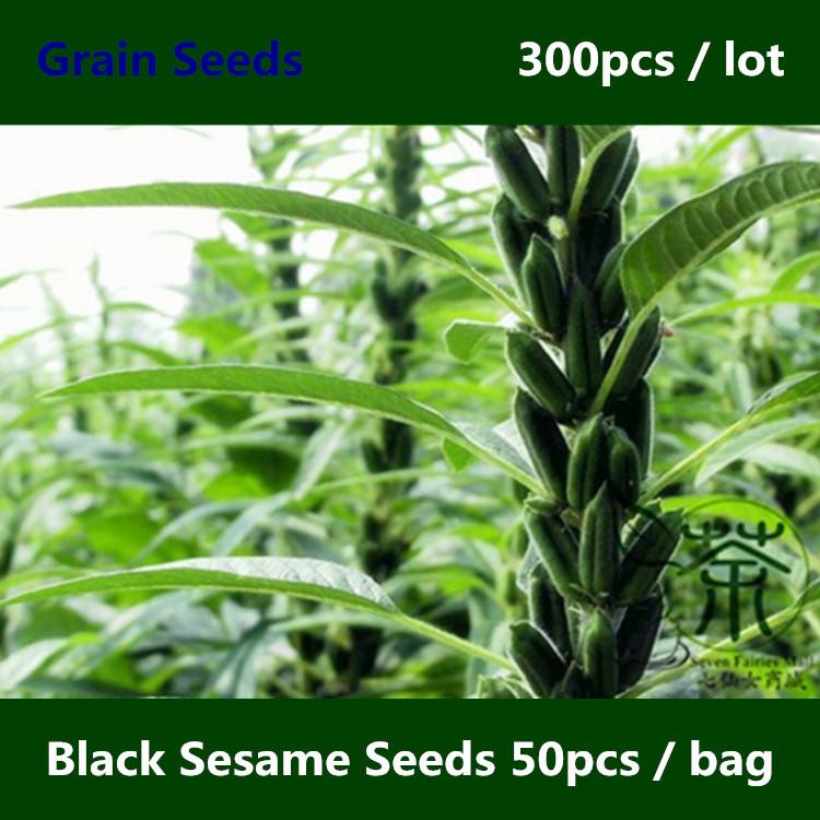 Annual Herbs Plant  Black Sesame Seeds 300pcs, Very Drought-tolerant Hei Zhi Ma Grain Seeds, Original Semen Sesami Nigrum Seeds(China (Mainland))