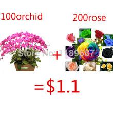 2 tipo de flor sementes 100 peças sementes de orquídeas borboleta e enviar rose sementes como presente 11.11 promoção a partir de hoje de menor preço(China (Mainland))