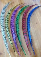 EMS Free shipping 100pcs mix 2 colors Pheasant Tail Feather 90-100cm lady amhurst pheasant tail Feathers