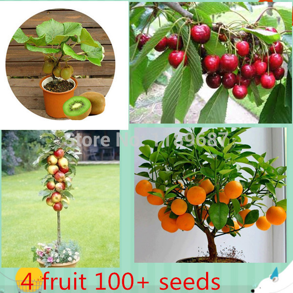 4 kind fruit bonsai fruit tree seeds vegetable and fruit seeds total 100 seeds