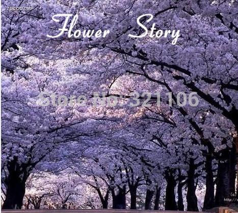 Free Shipping 25 Paulownia Seeds Princess Tree or Royal Empress Tree provide shade fragrant fast growing