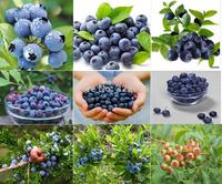 free shipping 30pcs/lot  AMERICAN BLUEBERRY Fruit Seeds, Germination 95%+ DIY HOME GARDEN