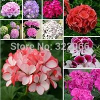 100pcs/lot mix color  Flower seeds purple Hydrangea evergreen woody flowering long Hydrangea Germination 95%+ DIY HOME GARDEN