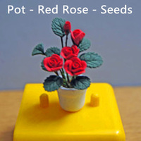 Free Shipping-Red Rose - Seeds - potted indoor and outdoor potted plants purify the air mixing colors - Free Shipping