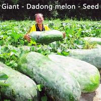 Farmland - Dadong melon - Seed - Giant - East melon - (seeds)