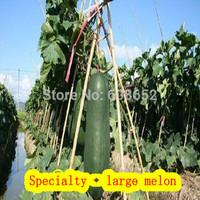Lot Wholesale Eatable-088 Dadong melon - Seed - Giants - East melon-seeds