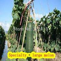Farm - Gourmet - Dadong melon (seeds)- free shipping-Garden Pots & Planters-Bonsai