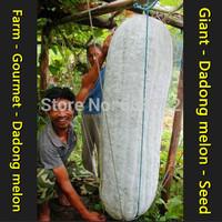 Giant - Dadong melon - Seed - Farmland - (seeds)