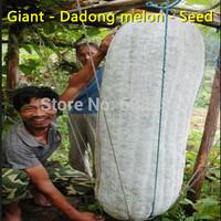 Free shipping - Farmland - Dadong melon - Seed - Giant - East melon - (seeds)