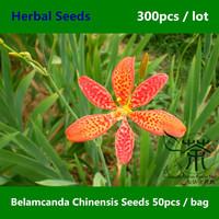 Iridaceae Family Belamcanda Chinensis Seeds 300pcs, Perennial Herbs Iris Domestica Seeds, Leopard Flower Blackberry Lily Seeds