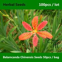 Elegant Belamcanda Chinensis Seeds 100pcs, Medicinal And Landscape Value Iris Domestica Seeds, Interesting Blackberry Lily Seeds