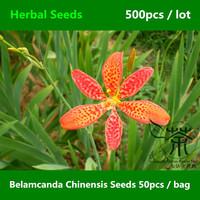 Leopard Flower Belamcanda Chinensis Seeds 500pcs, Leopard Lily Iris Domestica Seeds, An Ornamental Plant Blackberry Lily Seeds