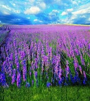 5X7ft lavender blossom Backgrounds For Photo Studio Wedding Photography Backdrop Muslin Computer Printed Background