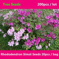 Family Ericaceae Rhododendron Simsii Seeds 200pcs, Beautifying Sims Azalea Tree Seeds, The Deciduous Shrub Du Juan Flower Seeds