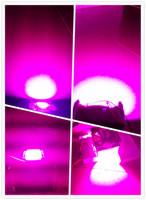 Free shipping  COB integrate 50W led grow light hydroponics DIY cheap plant lights lighting shipping