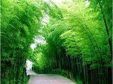 50 stück/tasche chinesische bambus samen, perfekte ornamentalen heimwerken Gartenpflanze, essbaren bambussprossen, kostenloserversand(China (Mainland))
