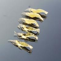HOT!!! 6 Pcs/lot 4cm with Hook Fake Artificial Lure Luminous Fishing Lure Soft Shrimp Lure D2850