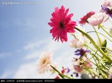 100 pçs/saco Saintpaulia sementes violeta africano semente de flor variedade completa a taxa de brotamento de 95%(China (Mainland))