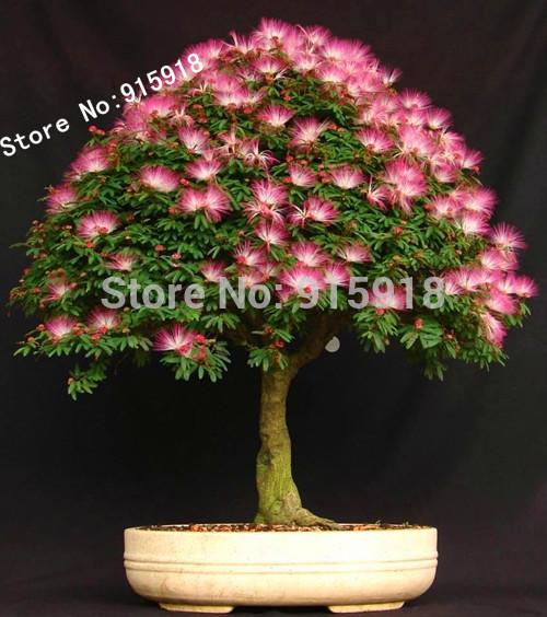 Карликовое дерево Bonsai001 10