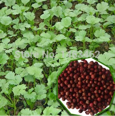 Карликовое дерево Seeds vegetables 100 , карликовое дерево fruit seeds 12