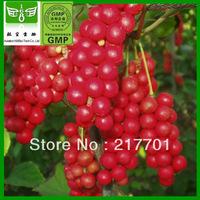 1000g[Discount]100% Natural Schisandrae P.E. 10:1 Schisandrae extract