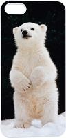 Lovely Little Polar Bear Hard Unique Designer Slim case for apple iphone 5 5S 5G