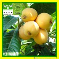 [Discount]1Kg Ursolic Acid / Loquat Leaf Extract / Folium Eriobotryae P.E HPLC