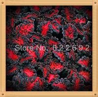 400 Piece Mysterious Tornado Rose Flower Seeds